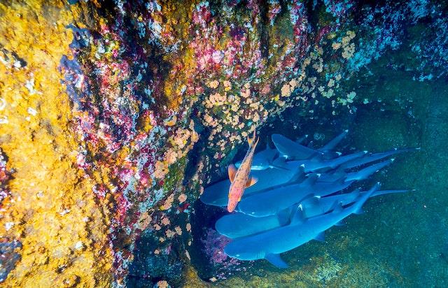 bloqueador arrecifes