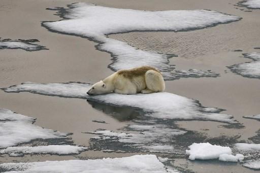 cambio climático y calentamiento global