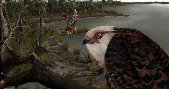 fósiles del águila depredadora australiana