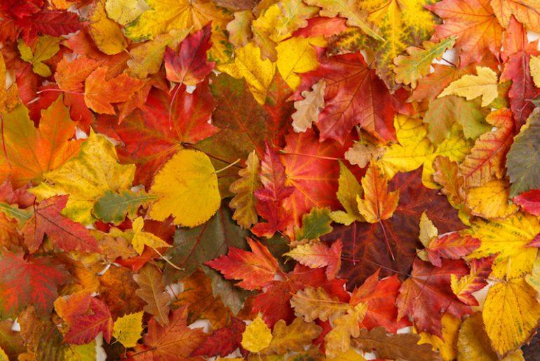 otoño hojas colores