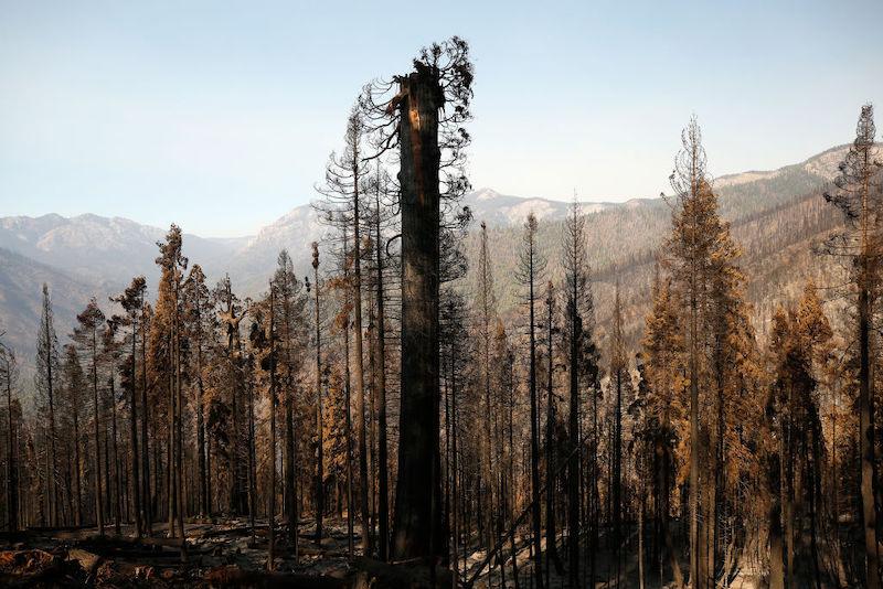 secuoyas incendios California