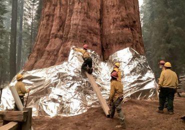incendios california secuoyas