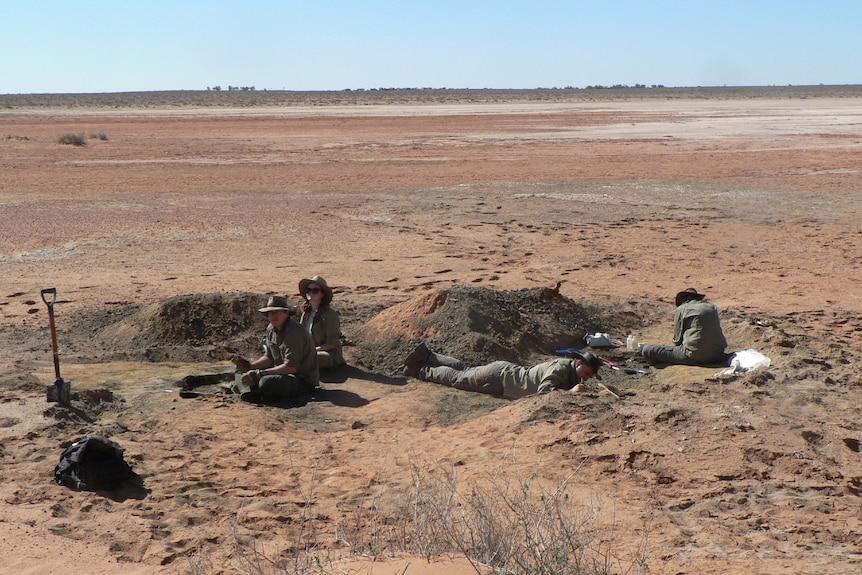 paleontólogos descubren fósiles del águila depredadora australiana