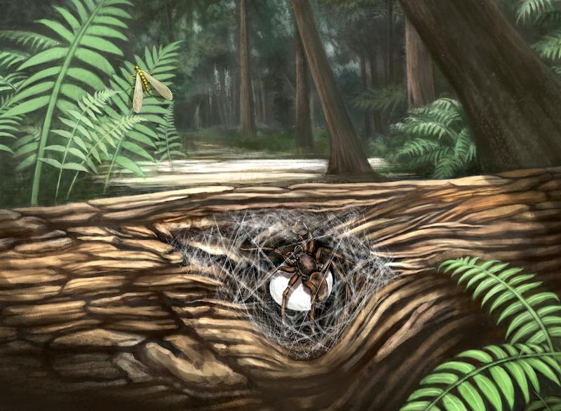 araña prehistórica