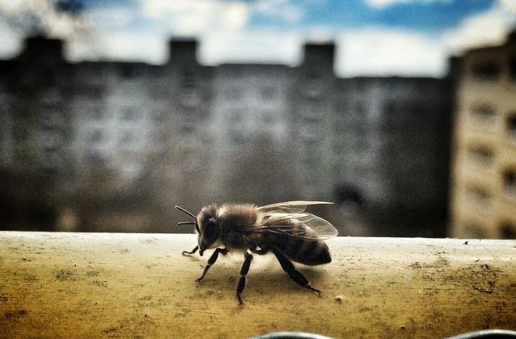 contaminación insectos