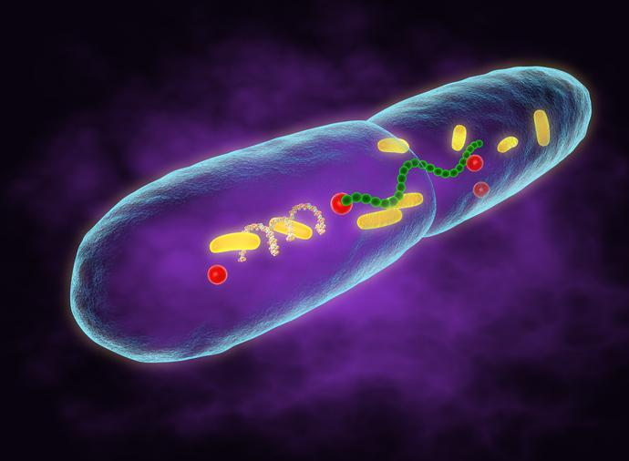 bacteria de la lepra