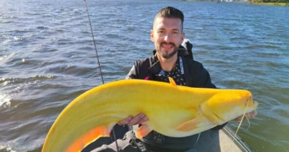 Pez siluro con leucismo es atrapado en países bajos por pescador