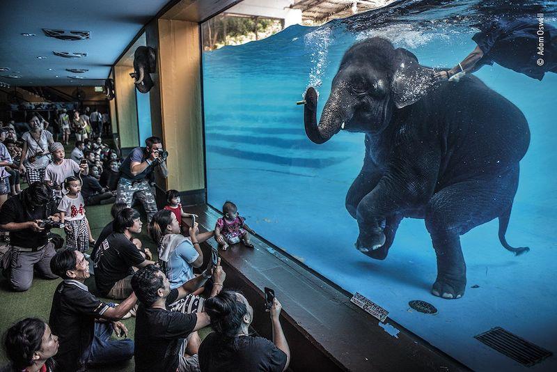 wildlife photographer of the year 20214